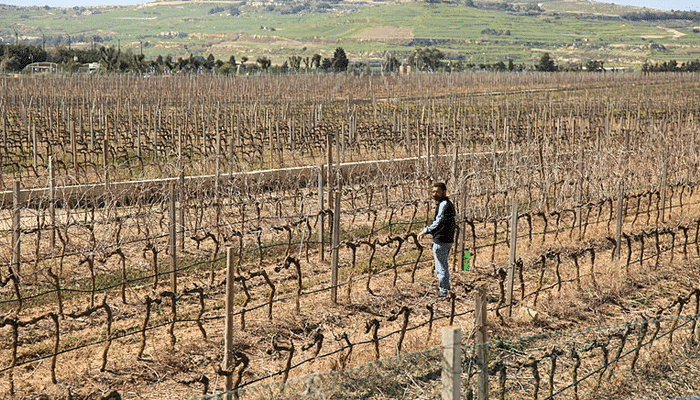Farming-in-Malta